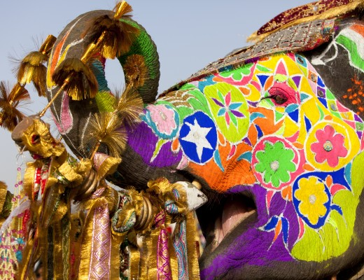 Decorated elephant at the elephant festival in Jaipur.